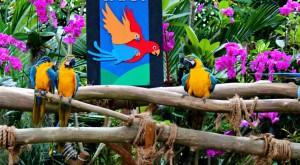 birdpark-1350