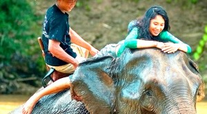 Elephants-riding